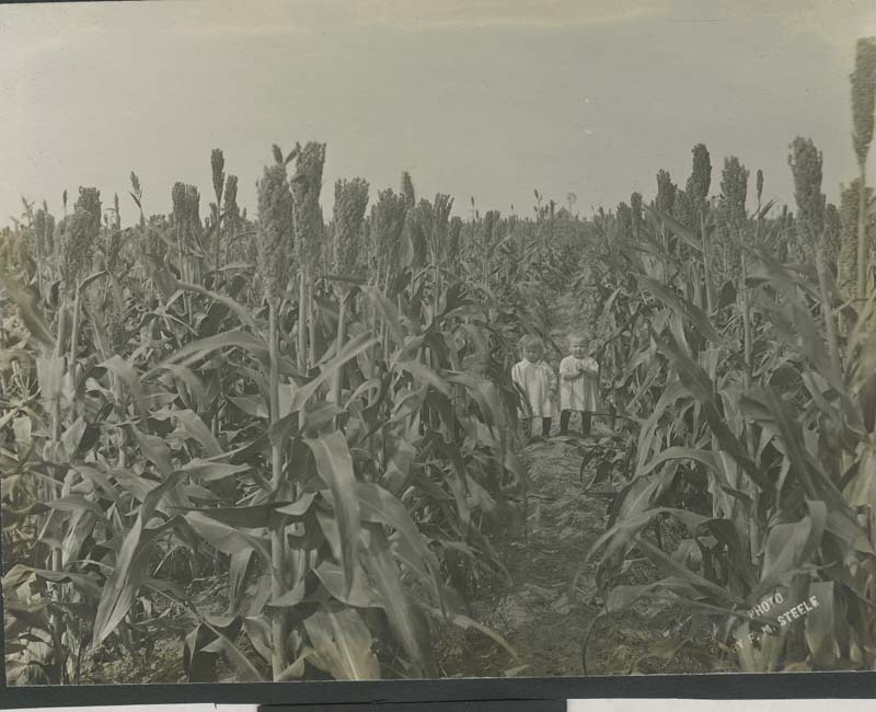 Twins Lorene And Loring Miner In A Kafir Corn Field