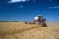 Cutting wheat, Kingman, Kansas