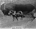 Mule pulling a cart of coal