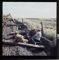 Atchison, Topeka & Santa Fe Railway Company's track crew, Arizona - 3