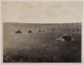 John Wesley McManigal photographs - Photograph showing stacks of wheat during harvest.