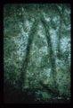 Petroglyphs from Ellsworth County - 6