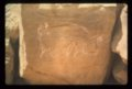 Petroglyphs from the Indian Hill Site, 14EW1 - 6