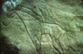 Pictographs from Russell County - 4