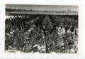 Field of Kaffir Corn, Butler County, Kansas - front