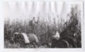 Haskell Institute students working on a farm, Lawrence, Kansas - 1