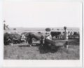 Cattle in Woodson County, Kansas