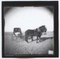 Horse-drawn buggy, Ellis, Kansas