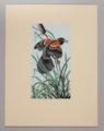Portfolio of Kansas Birds - Red-winged blackbird