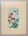 Portfolio of Kansas Birds - Hummingbird