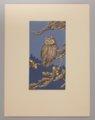 Portfolio of Kansas Birds - Screech Owl