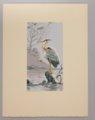 Portfolio of Kansas Birds - Heron