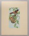 Portfolio of Kansas Birds - Oriole