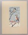Portfolio of Kansas Birds - Chickadee