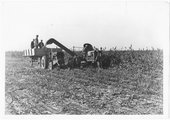 Feed crop harvested, ensilage cutter, Finney County, Kansas