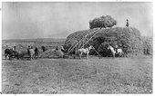 Harvesting hay in Sheridan County, Kansas