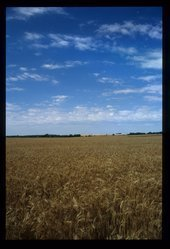 Conrardy Seed Company, Kingman, Kansas
