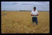 Robert Miller farm, Wellington, Kansas, Harvesting Scenes