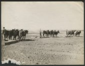 Three teams of horses pulling wooden sleds possibly in Seward County, Kansas