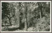 Lone Tree marking the site of the Marais de Cygnes massacre