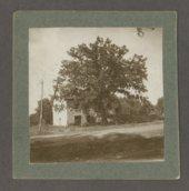 "An original ""Council Grove"" tree, Council Grove, Kansas"