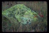 Petroglyphs from Chautauqua County, 14CT305