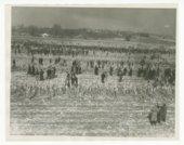 National Corn Husking contest near Topeka, Kansas