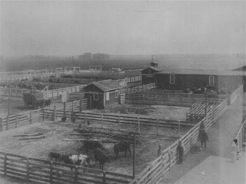 Barns and corrals on the old Bismarck Grove fairgrounds - Page