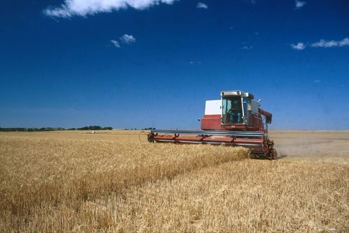 View of a man in a combine cutting wheat on the Paul and Steve Conrardy Farm and Seed Company land near Kingman, 1998
