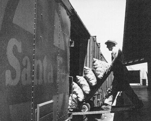 Loading potatoes - Page