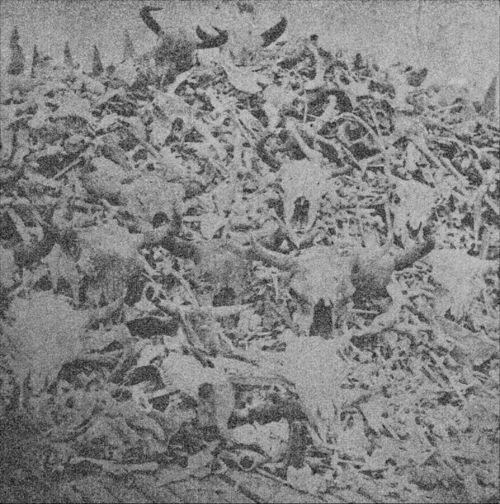 Buffalo skulls and bones - Page
