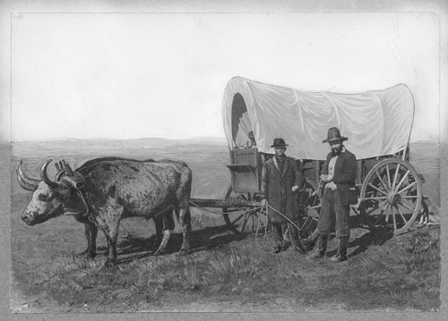 Covered wagon pulled by an ox. - Page