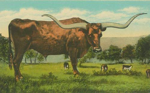 Texas Longhorn - Page