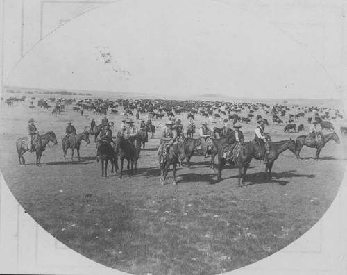 Cowboys with a herd of cattle. - Page