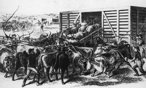 Loading Texas cattle, Abilene, Kansas - Page