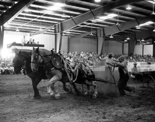 Horse pull, Hutchinson, Kansas - Page