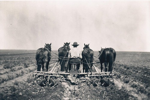 Frank Boeger plowing a field - Page