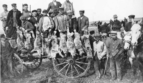 Coyote hunt in Ford County - Page