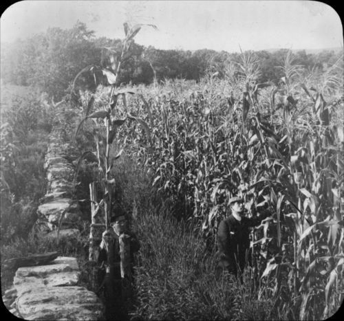 Corn field, Kansas - Page