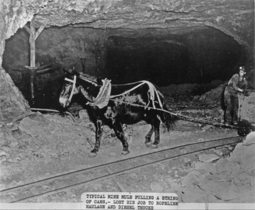 Mule pulling a cart of coal - Page
