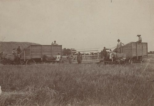 Harvesting crew, Saline County, Kansas - Page