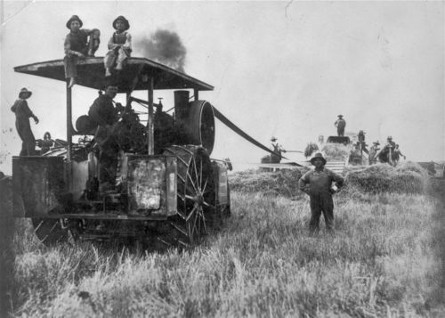 Volga-German immigrants used a steam powered threshing machine to harvest wheat near Munjor in Ellis County.