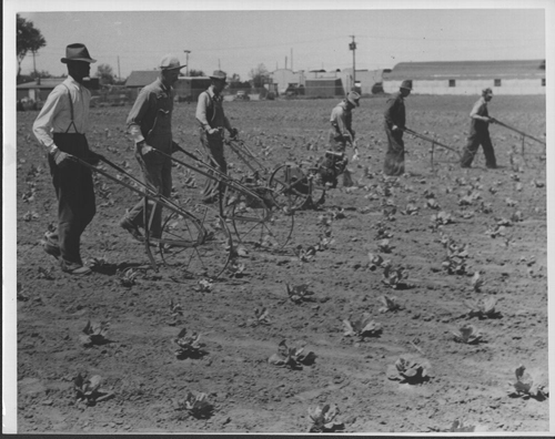 Men tilling a garden in Wichita, Kansas - Page