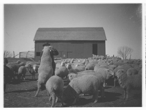 Eddy sheep farm, Washington County, Kansas - Page
