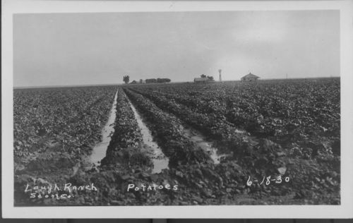 Potatoes, Lough ranch, Scott County, Kansas - Page