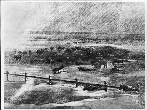 Photo of a drawing of a herd of cattle in a blizzard drawn by Charles Graham from a sketch by Henry Worrall, 1886.