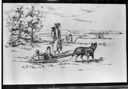 The sketch above depicts a travois pulled by a dog, which is what the tribe used prior to horses.