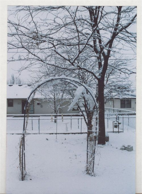 Tree covered with snow and ice, Topeka, Kansas - Page