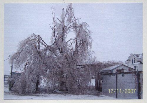 Ice storm damage, Seneca, Kansas - Page