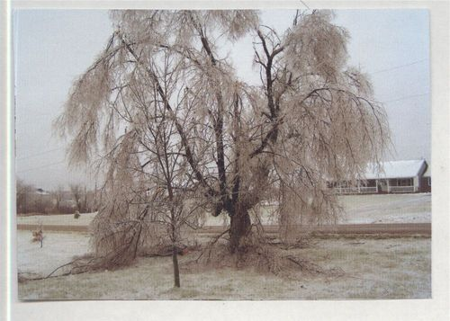 Tree covered with ice, Meriden, Kansas - Page